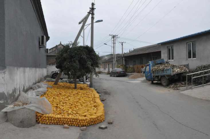 CORN-IN-VILLAGE