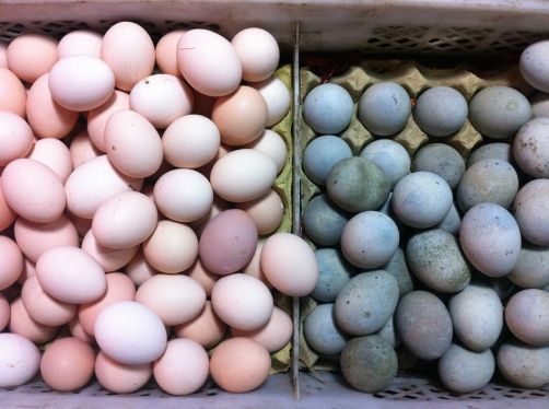 PINK AND GRAY EGGS